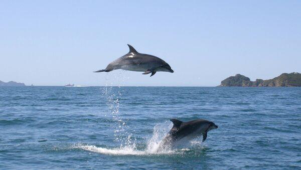 Дельфины - Sputnik Аҧсны