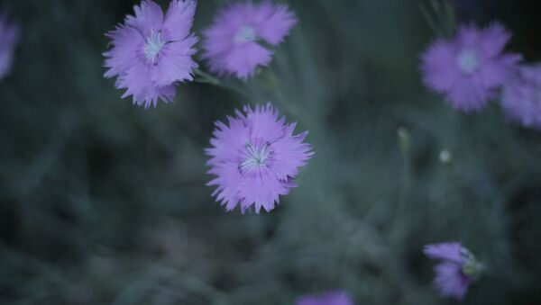 Цветы - Sputnik Абхазия