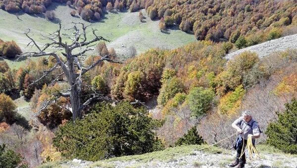 Самое старое дерево Европы - Sputnik Абхазия
