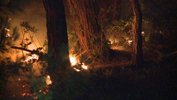 Пожар в лесу в Старой Гагре в понедельник 11 июня   - Sputnik Аҧсны