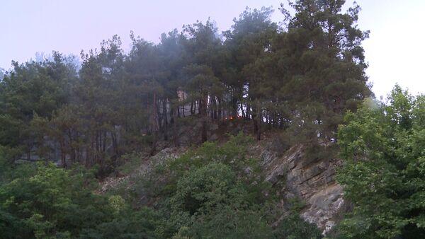 Пожар в лесу в Старой Гагре около полудня в понедельник 11 июня - Sputnik Абхазия