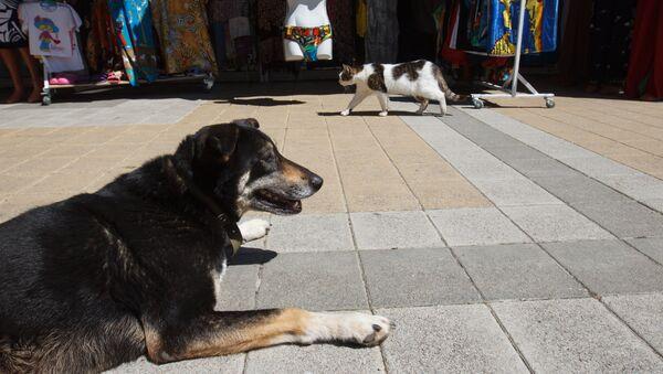 Собака и кошка на набережной в Сочи - Sputnik Аҧсны