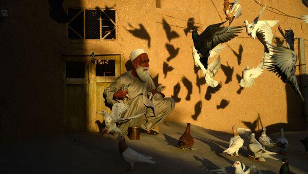 70-летний разводчик голубей Абдул Гани кормит питомцев на крыше своего дома в афганском городе Герат - Sputnik Абхазия