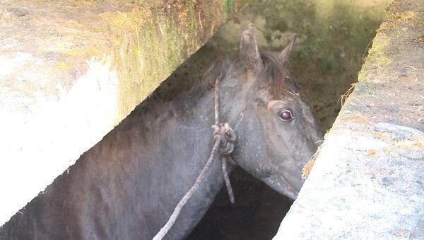 Вызволить из каменного плена: как спасали лошадь в Сухуме - Sputnik Абхазия
