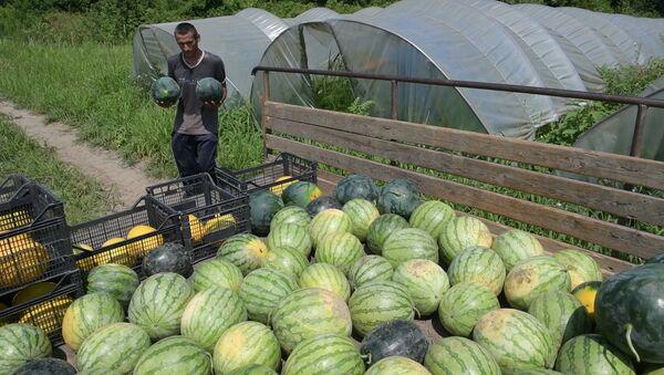 Как в абхазском селе собирают арбузы - Sputnik Абхазия