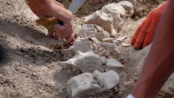 Скелет древнего кита найден на участке будущей железной дороги-подхода к Крымскому мосту - Sputnik Абхазия