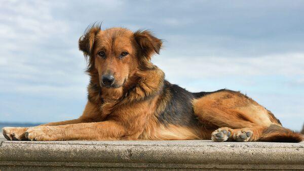 Бездомные собаки - Sputnik Абхазия