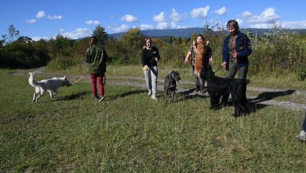 Найти и спасти: как проходят учения кинологов в Абхазии - Sputnik Абхазия