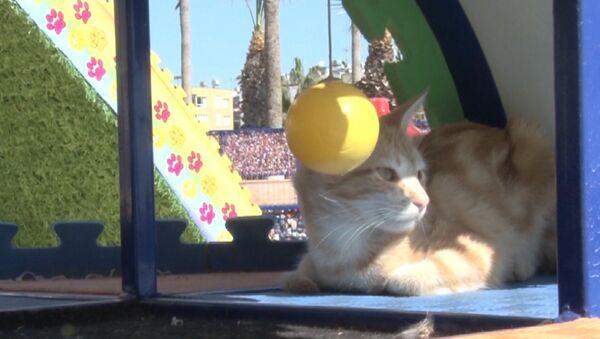 Мяу-парк для бездомных кошек в Турции - Sputnik Абхазия