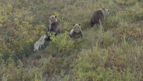 Собака и медведи - Sputnik Абхазия