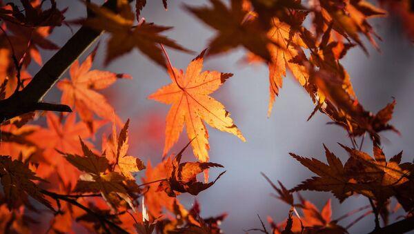 Осень - Sputnik Абхазия