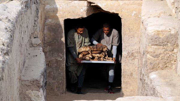 Работники выносят мумифицированных животных, обнаруженные в Саккаре, Египет 10 ноября 2018 - Sputnik Абхазия