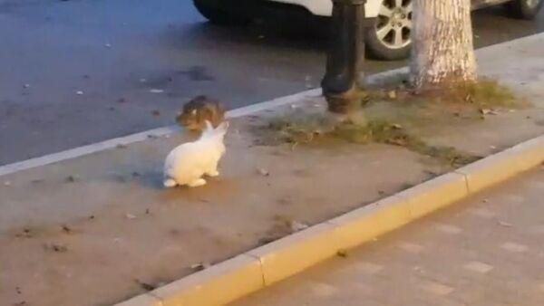 Голодный кролик атакует: ушастый терроризирует сухумского кота - Sputnik Абхазия