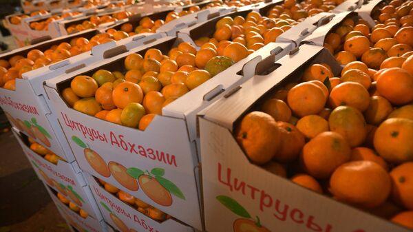 Сбор мандаринов в Абхазии - Sputnik Аҧсны