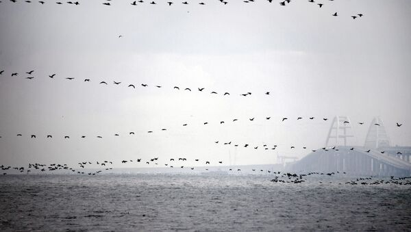 Птицы над Керченским проливом - Sputnik Абхазия