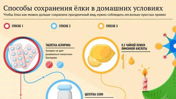 Способы сохранения елки - Sputnik Абхазия
