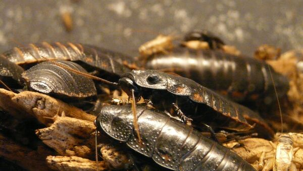 Тараканы - Sputnik Абхазия