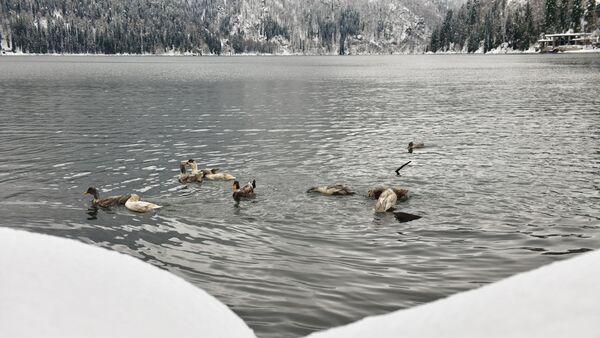Зимнее озеро Рица - Sputnik Аҧсны