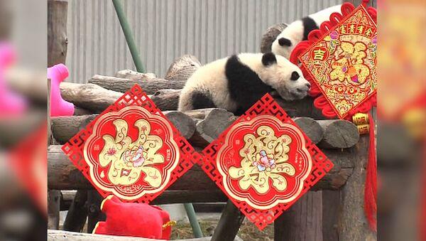 СПУТНИК_Китайский Новый год для панд - Sputnik Абхазия