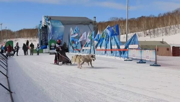 На Камчатке дети соревнуются в гонках на собачьих упряжках - Sputnik Абхазия