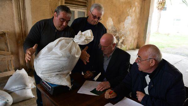 Прием мраморного клопа в Очамчыре, 15 марта 2019 - Sputnik Абхазия