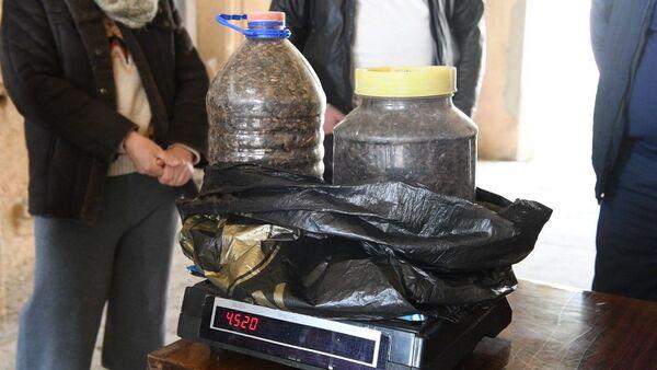 Каждый клоп на счету: как сдавали урожай насекомых-вредителей в Очамчыре - Sputnik Абхазия