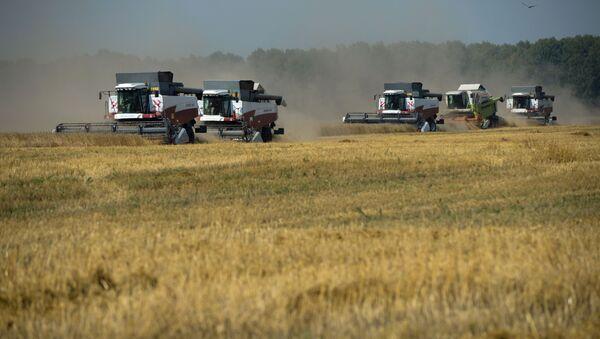 Уборка урожая зерновых в Новосибирской области - Sputnik Абхазия