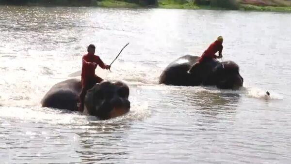 Слонам устроили тренировку в воде в честь церемонии коронации короля Таиланда - Sputnik Абхазия