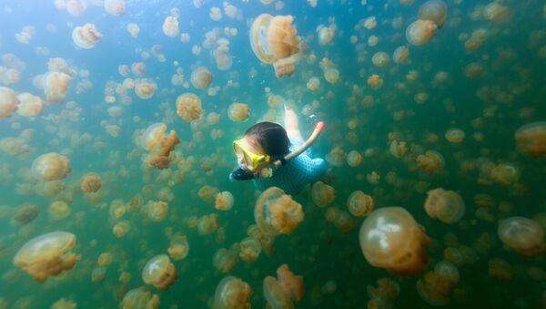 Девушка занимается подводным плаванием в Озере Медуз в архипелаге Скалистые острова, Палау - Sputnik Абхазия