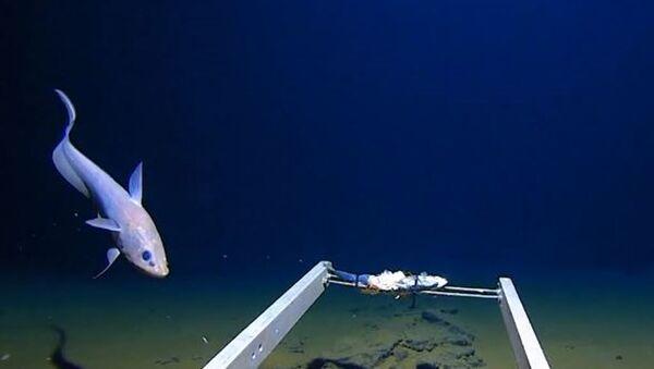 Исследователь Марианской впадины обнаружил пластиковый пакет на глубине 11 км - Sputnik Абхазия