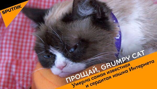 Прощай, Grumpy Cat - Sputnik Абхазия