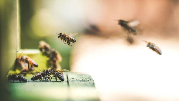Пчелы - Sputnik Абхазия
