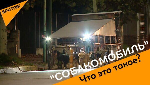 Что такое собакомобиль - Sputnik Абхазия
