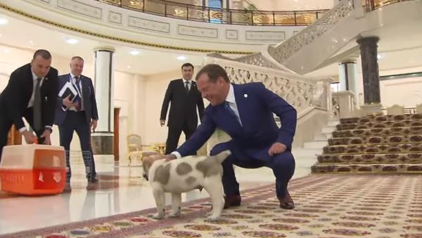 Дмитрию Медведеву подарили щенка - Sputnik Абхазия