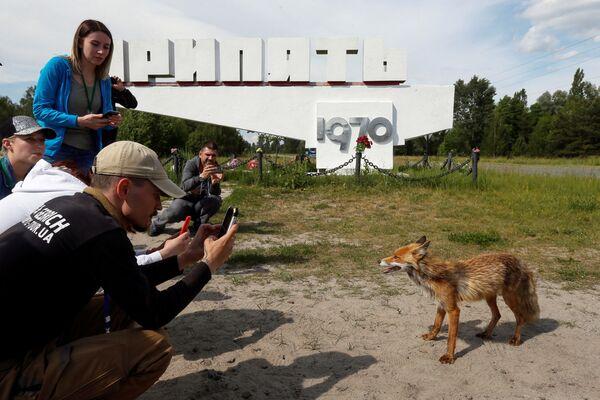 Туристы фотографируют лису в городе Припять у Чернобыльской АЭС - Sputnik Абхазия