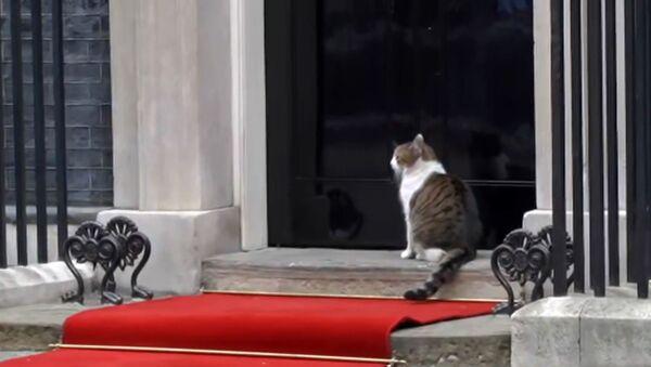 Это для меня? Кошка на Даунинг-стрит прогуливалась по красной дорожке Трампа! - Sputnik Абхазия