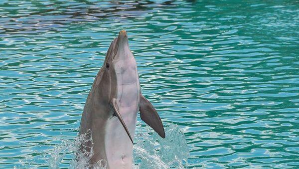 Дельфин - Sputnik Абхазия