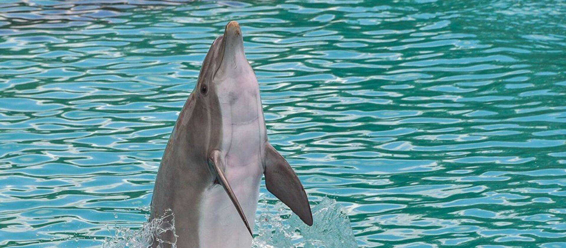 Дельфин - Sputnik Абхазия, 1920, 10.06.2019