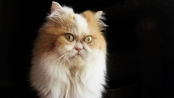 Новый Grumpy Cat - Sputnik Абхазия