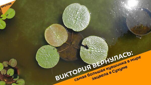 Виктория вернулась: самая большая кувшинка в мире зацвела в Сухуме - Sputnik Абхазия