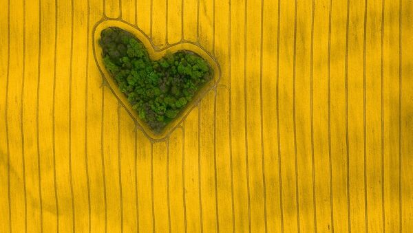Снимок Island of Love фотографа Jeremiasz Gądek, занявший первое место в категории Nature конкурса Drone Awards 2019 - Sputnik Абхазия
