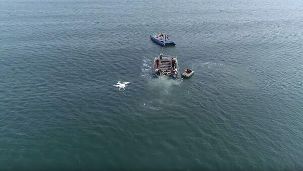 Освобождённые из китовой тюрьмы косатки попали на видео - Sputnik Абхазия
