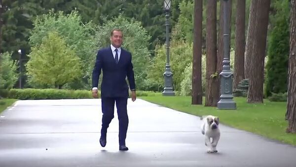 Медведев показал подросшего щенка, подаренного президентом Туркмении - Sputnik Абхазия