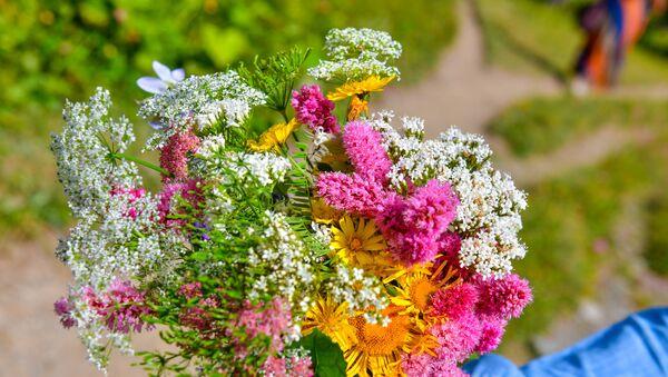 Полевые цветы - Sputnik Абхазия