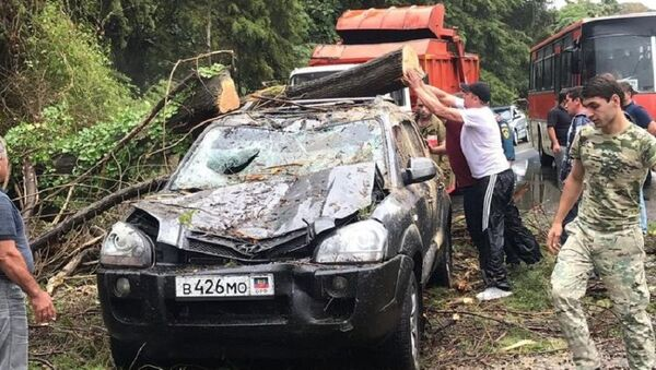Дерево упало на автомобиль в районе села Приморское - Sputnik Абхазия