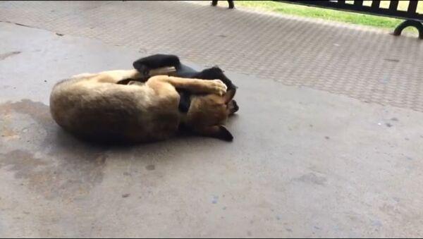 Собачка с кошкой - Sputnik Абхазия