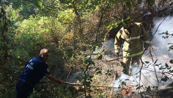 Лесной пожар в городе Сухум - Sputnik Аҧсны