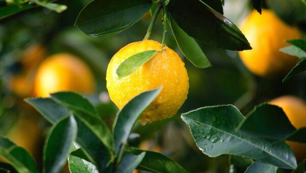 Лимон  - Sputnik Абхазия