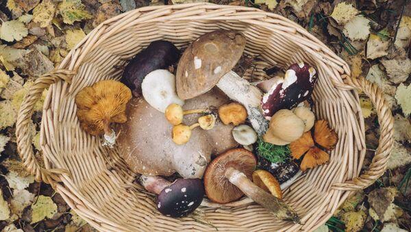 Корзина с грибами  - Sputnik Абхазия