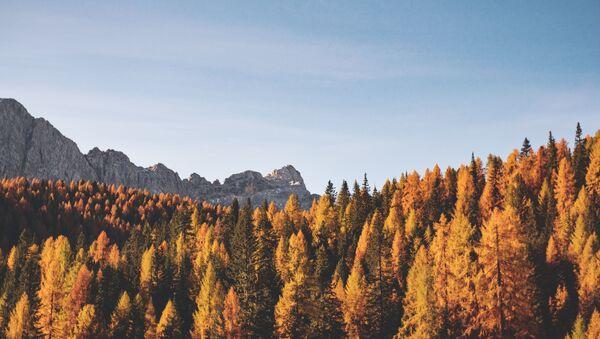 Осень в горах  - Sputnik Абхазия